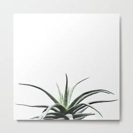 Succulents - Haworthia attenuata - Plant Lover - Botanic Specimens delivering a fresh perspective Metal Print
