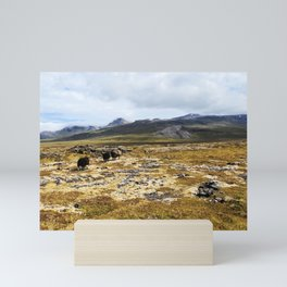 Iceland Sheep Mini Art Print
