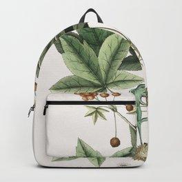 Polecat (Pseudo-Phalangium ramosum) from The natural history of Carolina Florida and the Bahama Isla Backpack