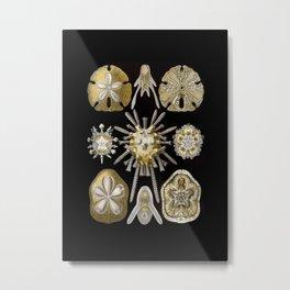 Ernst Haeckel Echinidea Sea Urchin Metal Print