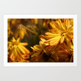 Daisys for Days  Art Print