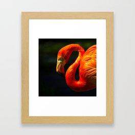 Flamingo Framed Art Print