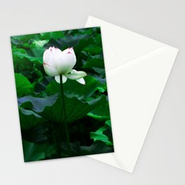 Lotus Pond Stationery Cards