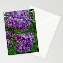 Lilacs in Bloom Stationery Cards