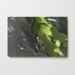 Summer Niose Metal Print