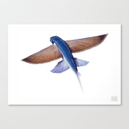 Flying Fish Canvas Print