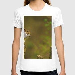 Cute Squirrel (Color) T-shirt