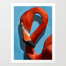 American Flamingo Profile Close-up Art Print