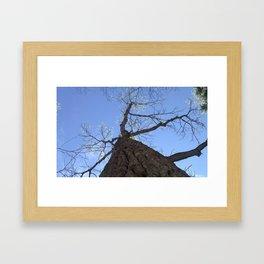 Naturally Clear Framed Art Print