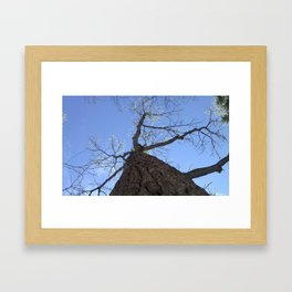 Naturally Clear Framed Art Print