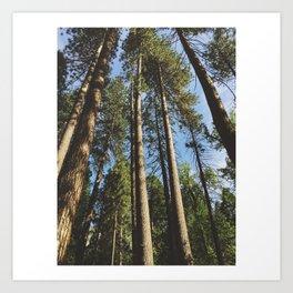 Woods of Yosemite Art Print