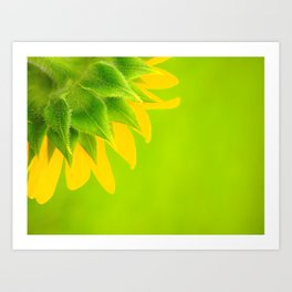 colorful sunflower Art Print