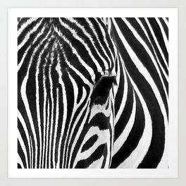 Portrait of Zebra Black and White #decor #society6 #buyart Art Print