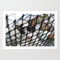 Kitty-Peek-A-Boo Art Print