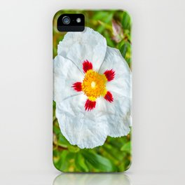 The Lost Gardens of Heligan - Rockrose iPhone Case