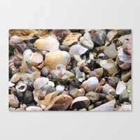 shells Canvas Prints featuring Shells by BACK to THE ROOTS