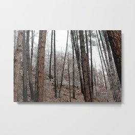 Light Dusting in the Forest Metal Print