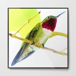 Tropical Hummingbird Pop Art Metal Print