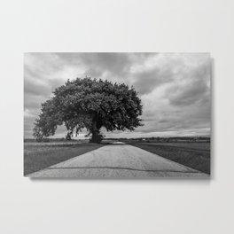 Arbor Apex Metal Print
