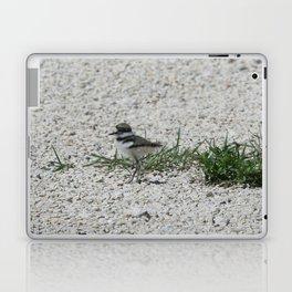 Baby Killdeer Laptop & iPad Skin
