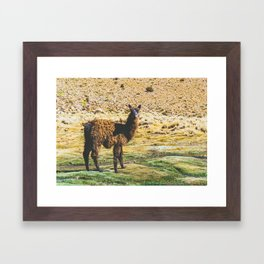 Wandering Llama in the Bolivian Desert Framed Art Print