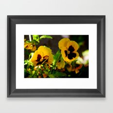 Yellow pansy garden Framed Art Print