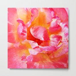 240 - Rose Petals up close Metal Print