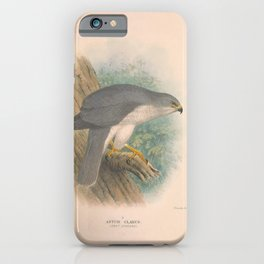 003 Grey Goshawk astur clarus4 iPhone Case