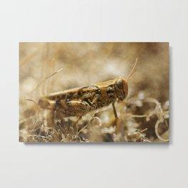 Meadow lifes #5 Metal Print