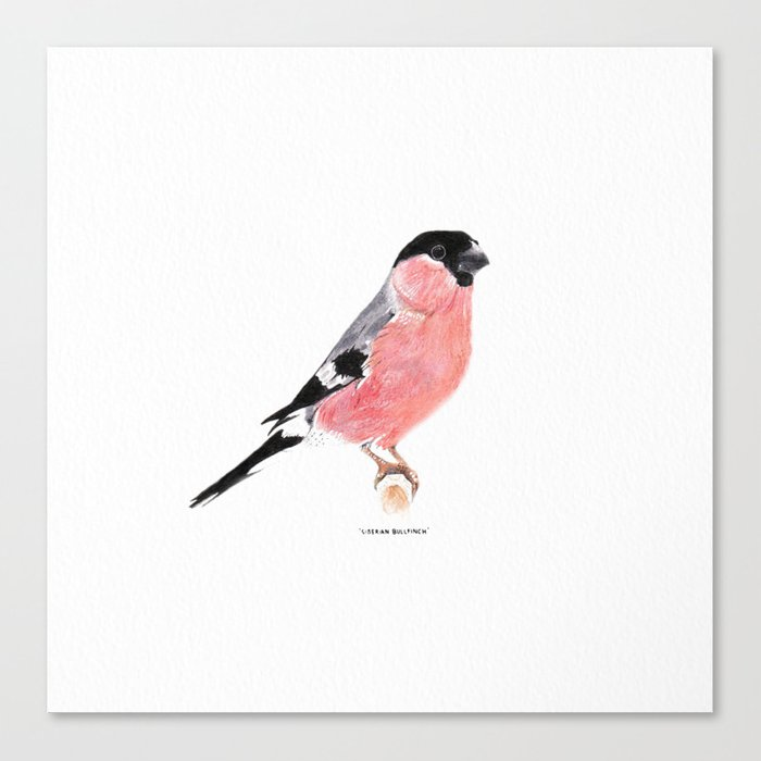 Siberian Bullfinch (white palette) Canvas Print