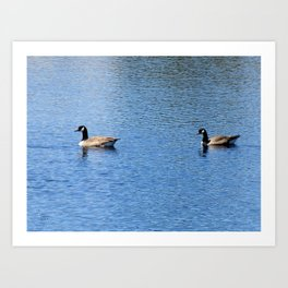 Pair of Geese Wading On A Lake Art Print