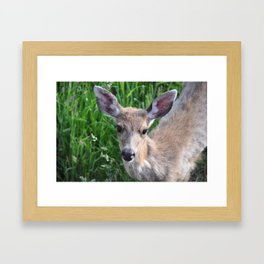 Young buck on the lawn 3 Framed Art Print