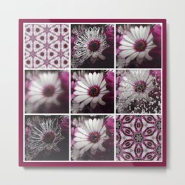 White and Magenta African Daisies Graphic Collage Metal Print