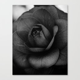 Camellia Black and White 3 Canvas Print