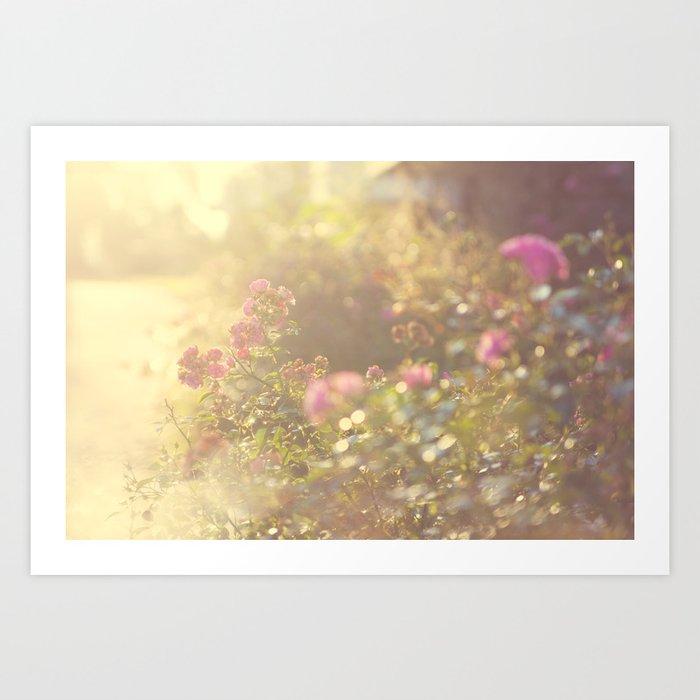 SUNLIGHT GARDEN Art Print