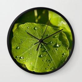 Rain drips on a nasturtium leaf Wall Clock