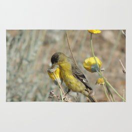 Mr. Lesser Goldfinch Feeds on Seeds Rug