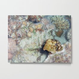 Baby Cuttlefish and Hard Coral Metal Print