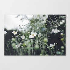 Botanicals Canvas Print