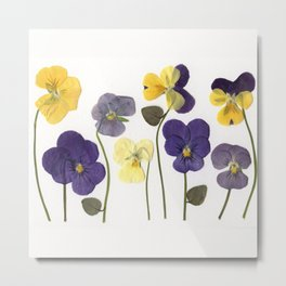 Pansy Row Metal Print
