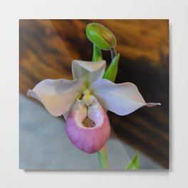 Lady's Slipper by Teresa Thompson Metal Print