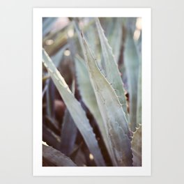 Winter Agave #3 Art Print