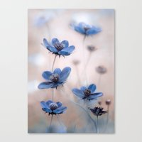 cosmos Canvas Prints featuring Cosmos by Mandy Disher