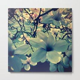Magnolias flowering Metal Print