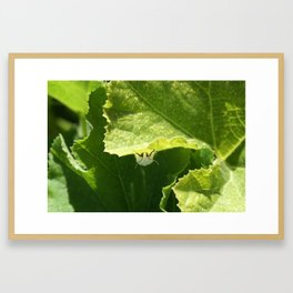 Peek-a-boo Moth Framed Art Print