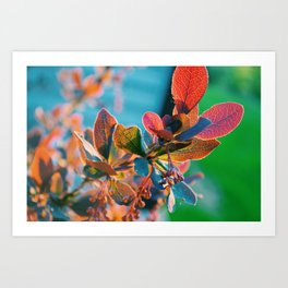 Golden Hour Shrub III Art Print