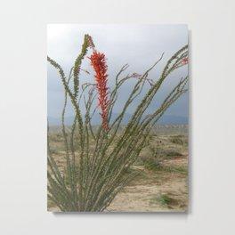 Ocotillo cactus Metal Print