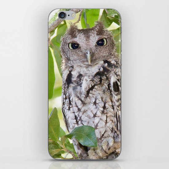 Screech Owl iPhone & iPod Skin