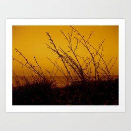 North Carolina Dunes Art Print