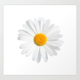 chamomile daisy Art Print